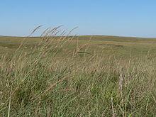 willa cather - prairie